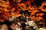 """""""Коралловый"""" грот, """"Ледяная пещера"""". Кунгур, Пермский край, эксклюзивное фото № 1025230, снято 5 августа 2009 г. (c) Кучкаев Марат / Фотобанк Лори"""