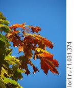 Осень. Стоковое фото, фотограф Владислав Цемкалов / Фотобанк Лори