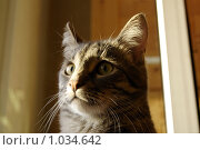 Кот. Стоковое фото, фотограф Ilogin / Фотобанк Лори