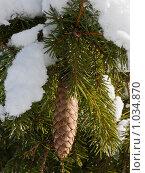 Купить «Еловая ветка с шишкой под снегом», фото № 1034870, снято 21 февраля 2009 г. (c) Виктор Сагайдашин / Фотобанк Лори