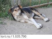 Купить «Бездомный пес», фото № 1035790, снято 2 августа 2009 г. (c) Лищук Руслан Викторович / Фотобанк Лори