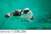 Черепахи. Стоковое фото, фотограф Сергей Галушко / Фотобанк Лори