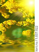 Желтые цветы. Стоковое фото, фотограф Олег Кириллов / Фотобанк Лори