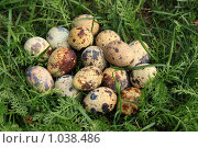 Перепелиные яйца в траве. Стоковое фото, фотограф Сычёва Виктория / Фотобанк Лори