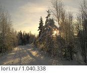 Зимняя дорога к солнцу. Стоковое фото, фотограф Наталья Михайлова / Фотобанк Лори
