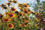 Цветы, фото № 1041422, снято 8 августа 2009 г. (c) Василий Аксюченко / Фотобанк Лори