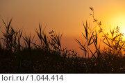 Купить «Силуэт травы на закате», фото № 1044414, снято 22 октября 2018 г. (c) SummeRain / Фотобанк Лори