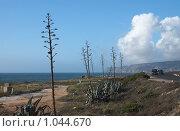 Португалия, Ривьера (2006 год). Стоковое фото, фотограф Всеволод Майский / Фотобанк Лори