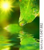 Зеленый лист над  водой. Стоковое фото, фотограф Олег Кириллов / Фотобанк Лори