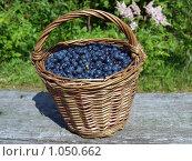 Купить «Корзинка черники», фото № 1050662, снято 21 июля 2009 г. (c) Троицкая Алиса / Фотобанк Лори
