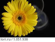 Цветок одинок. Стоковое фото, фотограф Валерия Ходжаева / Фотобанк Лори