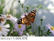 Бабочка на цветке. Стоковое фото, фотограф Дмитрий Жеглов / Фотобанк Лори
