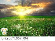 Купить «Зеленый луг», фото № 1067794, снято 22 января 2019 г. (c) Василий Нижников / Фотобанк Лори