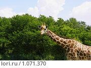 В Берлинском зоопарке (2009 год). Стоковое фото, фотограф Эдуард Финовский / Фотобанк Лори