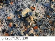 Ракушки в морской пене. Стоковое фото, фотограф Bushuev Sergey / Фотобанк Лори