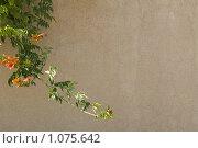Цветочный фон. Стоковое фото, фотограф Виктор Косьянчук / Фотобанк Лори