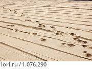 Купить «Болгария. Золотые пески. Пляж. Следы на песке.», фото № 1076290, снято 24 июля 2009 г. (c) Елена Соломонова / Фотобанк Лори
