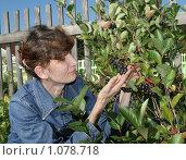 Купить «Женщина у куста с черноплодной рябиной в саду», эксклюзивное фото № 1078718, снято 6 сентября 2009 г. (c) Мария Зубарева / Фотобанк Лори