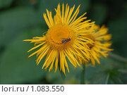 Цветок. Стоковое фото, фотограф Денис Шустиков / Фотобанк Лори