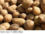 Картофель ( Урожай ) Стоковое фото, фотограф Ilogin / Фотобанк Лори