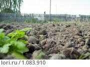 Участок земли на даче. Огород. Сорняки. Стоковое фото, фотограф Ilogin / Фотобанк Лори