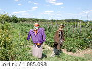 Купить «Огородное пугало. Чучело. Урожай. Огород. Деревня.», фото № 1085098, снято 20 июля 2009 г. (c) Елена Соломонова / Фотобанк Лори