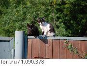 2 котенка на заборе. Стоковое фото, фотограф Григорий Евсеев / Фотобанк Лори