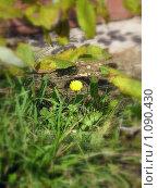 Желтый цветок. Стоковое фото, фотограф Ольга Иванова / Фотобанк Лори