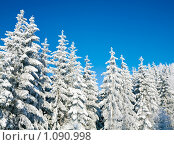 Купить «Зимний лес», фото № 1090998, снято 2 февраля 2009 г. (c) Юрий Брыкайло / Фотобанк Лори