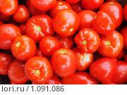 Купить «Урожай томатов», фото № 1091086, снято 24 августа 2009 г. (c) Данил Ефимов / Фотобанк Лори