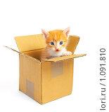 Купить «Рыжий котенок в картонной коробке», фото № 1091810, снято 18 апреля 2009 г. (c) Константин Тавров / Фотобанк Лори