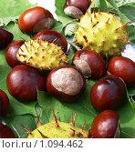 Купить «Плоды каштана», фото № 1094462, снято 1 октября 2008 г. (c) Татьяна Баранова / Фотобанк Лори