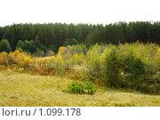 Елочки возле леса. Стоковое фото, фотограф 1 / Фотобанк Лори