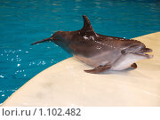 Купить «Дельфин», фото № 1102482, снято 20 августа 2009 г. (c) Литова Наталья / Фотобанк Лори