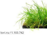 Купить «Пласт зеленой травы», фото № 1103742, снято 19 сентября 2009 г. (c) Данил Ефимов / Фотобанк Лори