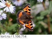 Летящая бабочка. Стоковое фото, фотограф Дмитрий Жеглов / Фотобанк Лори