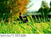 Зеленая трава в лучах уходящего солнца. Стоковое фото, фотограф Ilogin / Фотобанк Лори