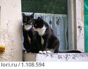 Купить «Две кошки сидят на окошке», эксклюзивное фото № 1108594, снято 28 мая 2008 г. (c) lana1501 / Фотобанк Лори