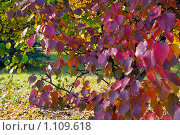 Краски осени. Стоковое фото, фотограф Сергей Жуков / Фотобанк Лори