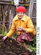Купить «Женщина высаживает чеснок. Осень», фото № 1114738, снято 26 сентября 2009 г. (c) Михаил Яковлев (ktynzq) / Фотобанк Лори