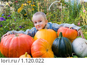 Купить «Мальчик с тыквами», фото № 1120022, снято 21 сентября 2009 г. (c) Елена Блохина / Фотобанк Лори