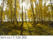 Осеннее солнце. Стоковое фото, фотограф Виктор Ковалев / Фотобанк Лори