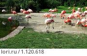 Купить «Розовые фламинго», фото № 1120618, снято 1 августа 2009 г. (c) Наталия Таран / Фотобанк Лори