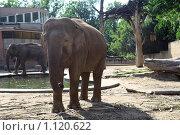 Купить «Слоны», фото № 1120622, снято 1 августа 2009 г. (c) Наталия Таран / Фотобанк Лори