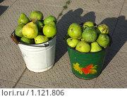 Купить «Груши», фото № 1121806, снято 13 сентября 2009 г. (c) Окунев Александр Владимирович / Фотобанк Лори