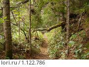 Купить «Тропа в курильской тайге. Остров Кунашир, Курилы», фото № 1122786, снято 20 сентября 2009 г. (c) RedTC / Фотобанк Лори