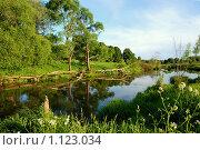 Уголок природы. Стоковое фото, фотограф Лариса Бондаренко / Фотобанк Лори