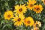 Цветы, эксклюзивное фото № 1127838, снято 11 июля 2009 г. (c) Дмитрий Неумоин / Фотобанк Лори