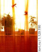 Окно. Стоковое фото, фотограф Климонтова Александра / Фотобанк Лори