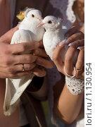 Купить «Свадебные голуби», фото № 1130954, снято 26 сентября 2009 г. (c) Аlexander Reshetnik / Фотобанк Лори